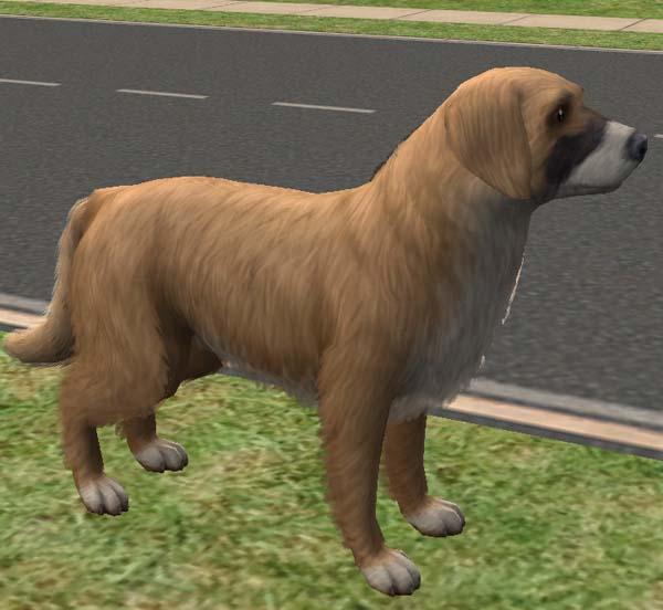 Mod The Sims Golden Retriever German Shepherd Dog Mix