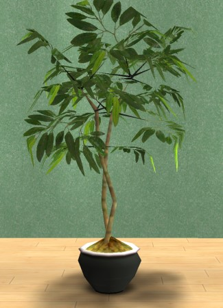 mod the sims rubber and fig tree in basic colours