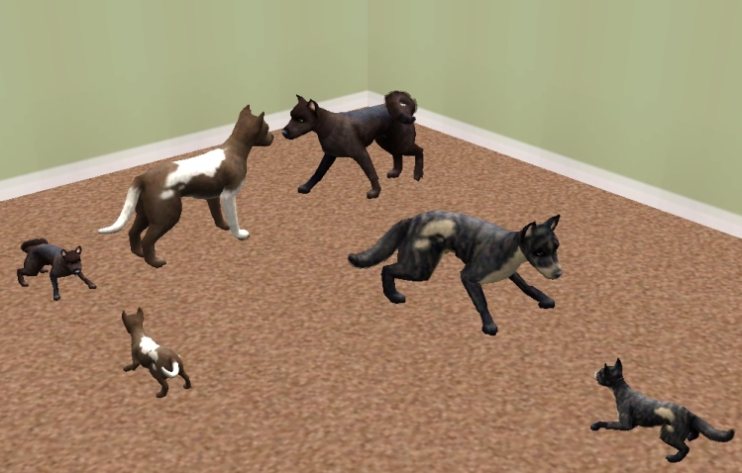 Sims  Cats And Dogs Can Different Size Dogs Breed