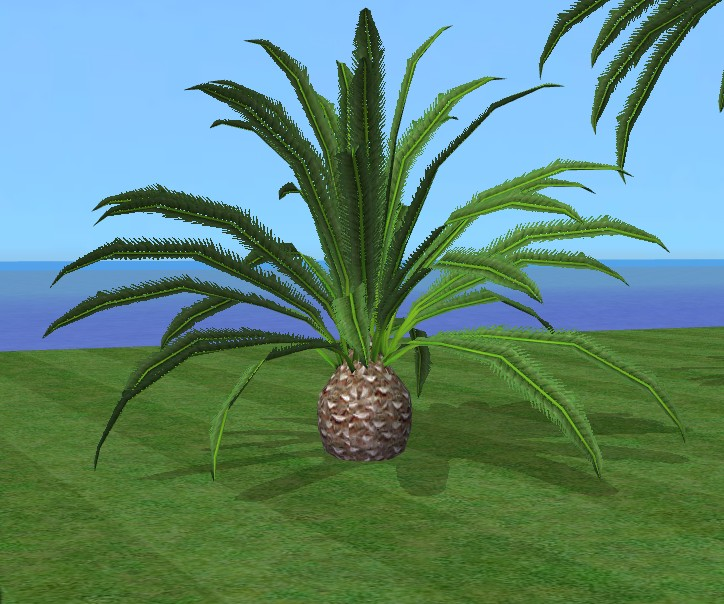 mod the sims realistic palm new phoenix canariensis. Black Bedroom Furniture Sets. Home Design Ideas