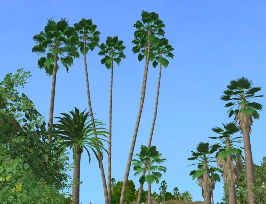mod the sims super realistic palm washingtonia robusta. Black Bedroom Furniture Sets. Home Design Ideas