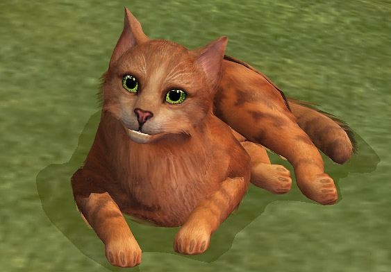Warrior Cats D Game
