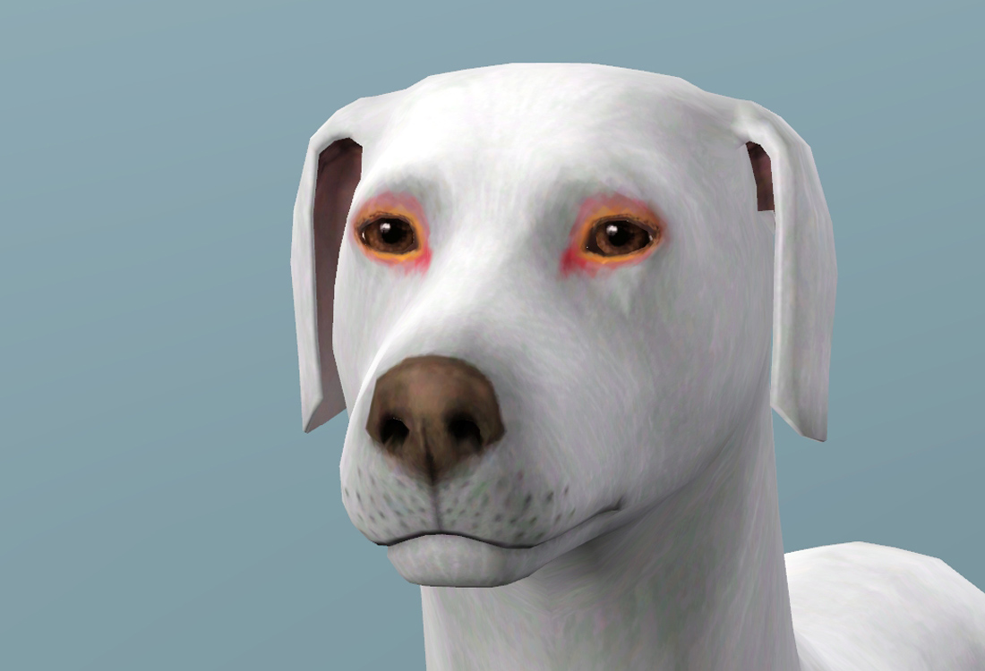 Cats And Dogs Sims  Mode Download