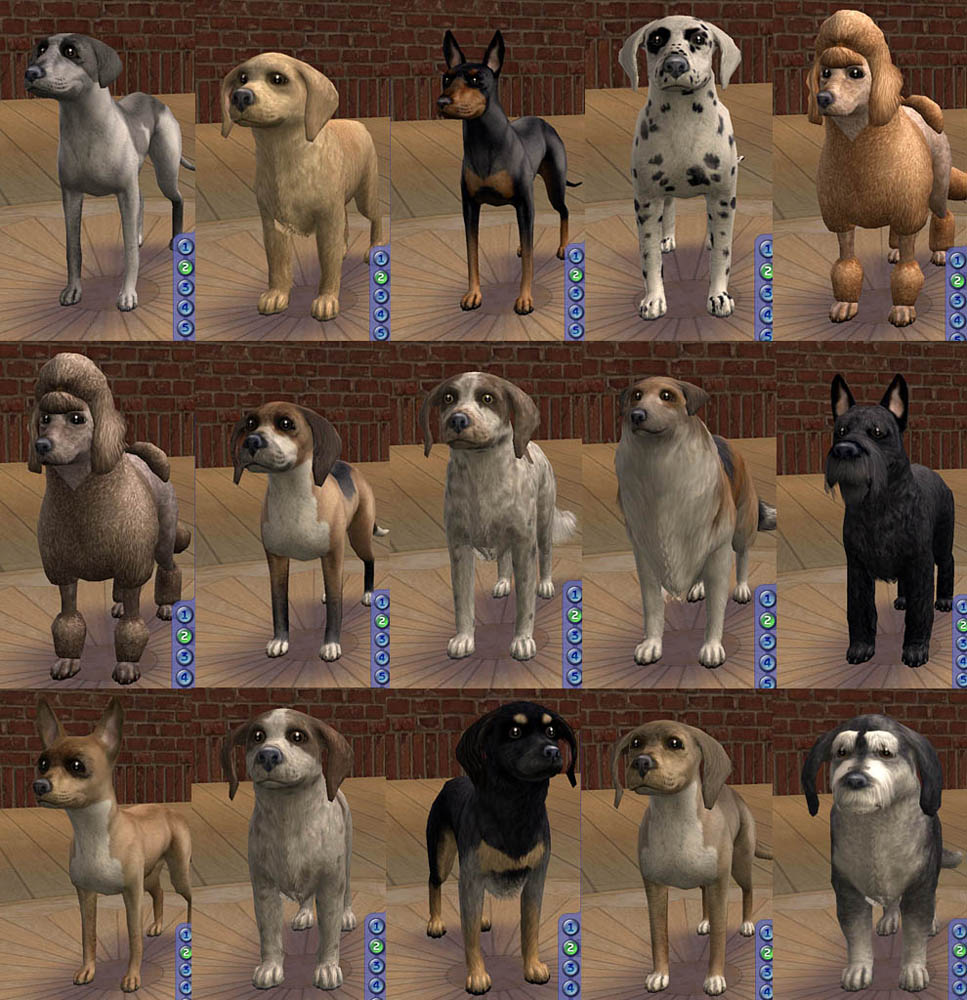 Mod The Sims Amjoie Dog Breeds Part One Small Dogs More Than