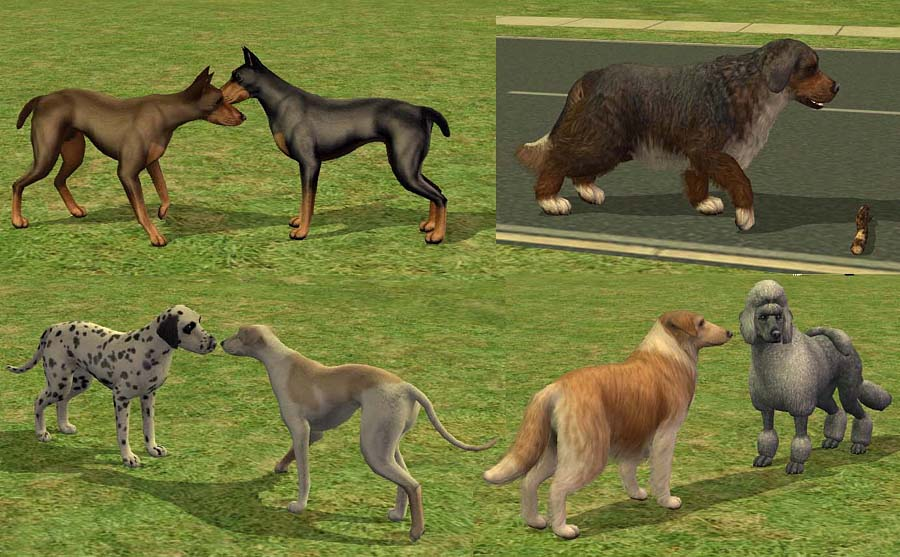 Mod The Sims - AMjoie Dog Breeds: Part Two -- Large Dogs (Two Dozen)
