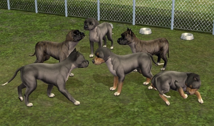 mod the sims   6 redesigned pitbulls