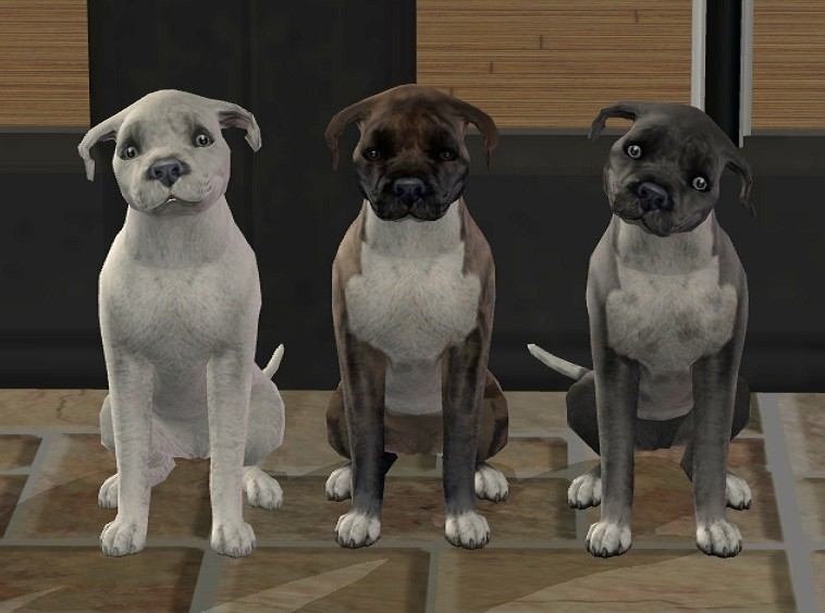 Mod The Sims 3 Staffordshire Bull Terrier Pups