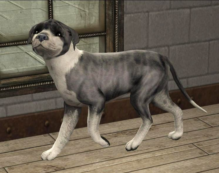 Mod The Sims Blue Brindle Staffordshire Bull Terrier