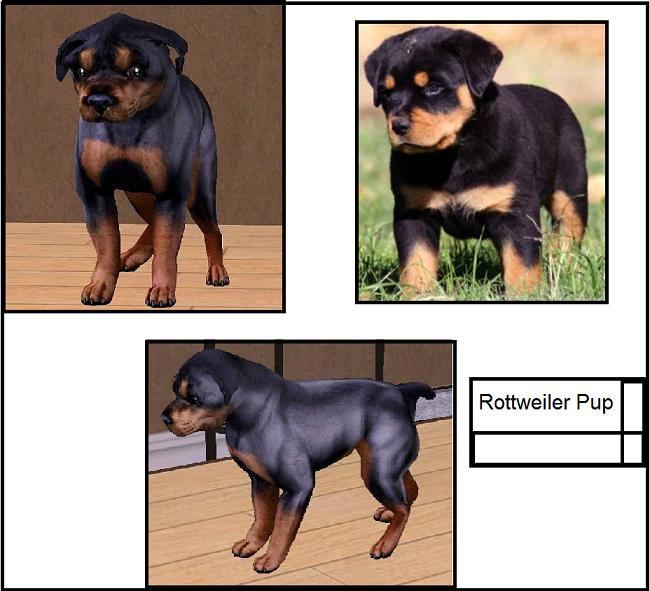 Amazing Rottweiler Chubby Adorable Dog - MTS_fling-89-1178570-RottweilerPupComparison  Trends_61850  .jpg