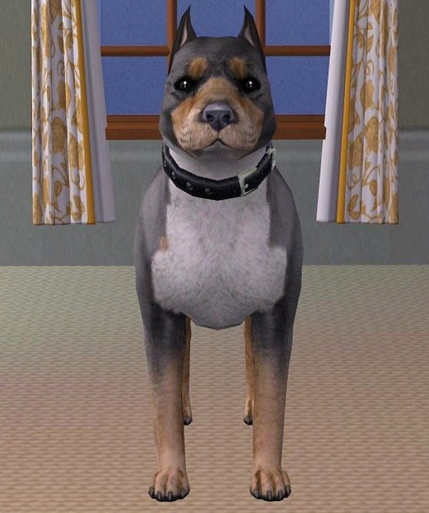 Mod The Sims - Tri-Color Pitbull Terrier