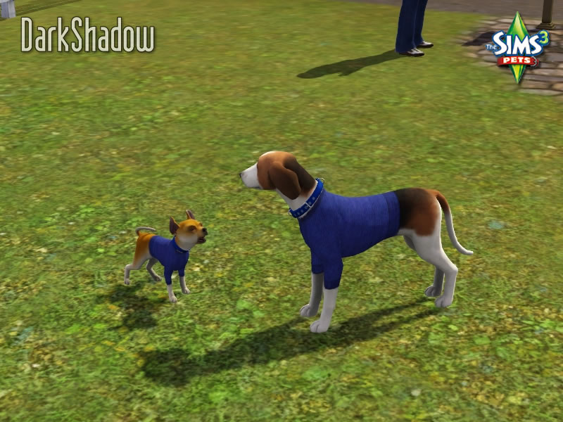 The Sims  Cats And Dogs Forum