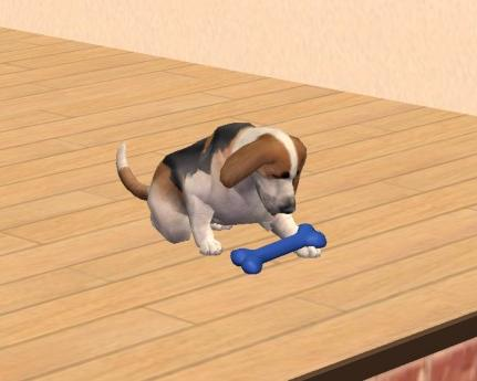 Sims 3 Afghan Hound Mod The Sims - Basset ...