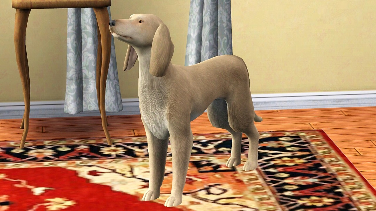 Sims 3 Afghan Hound the modern Afghan Hound