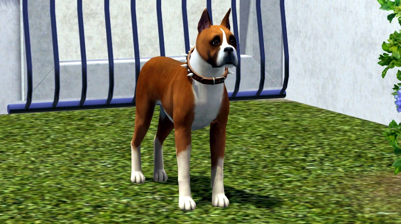How Many Puppies Will My Dog Have In Sims