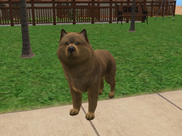 Sims  Cats And Dogs Breed Mixes