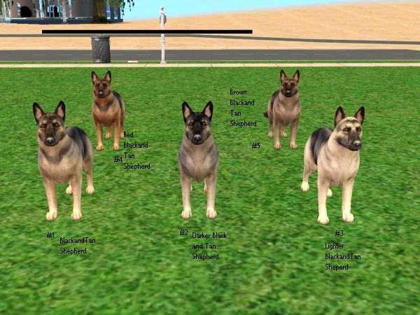 Sims  Cats And Dogs Callenges