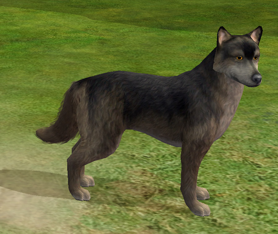 how to add a dog to the family sims 3