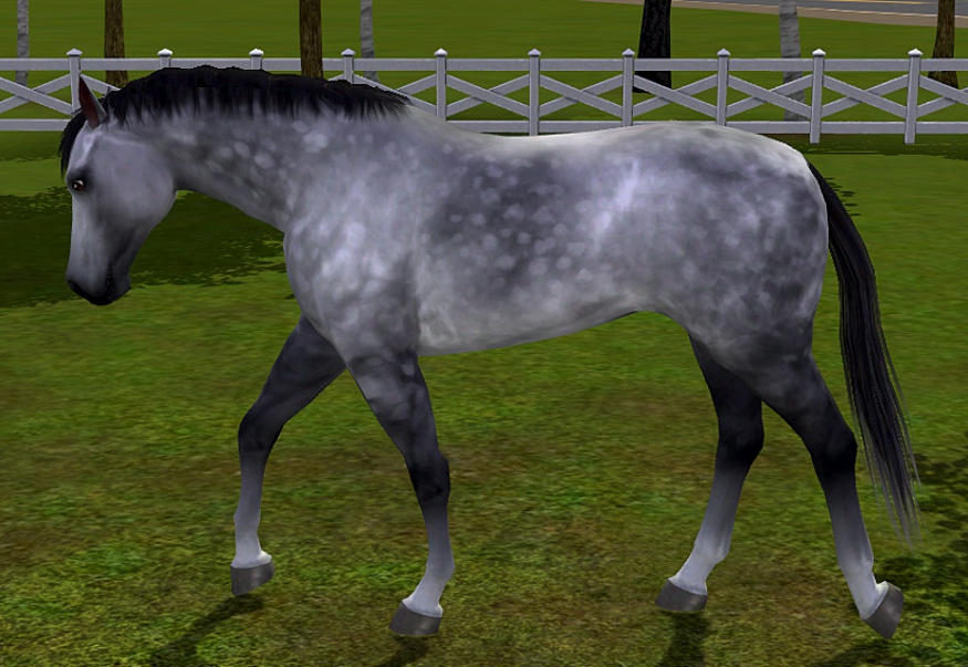 dapple grey horse running