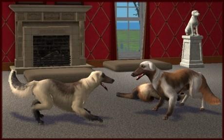 Sims 3 Afghan Hound Mod The Sims - Afghan Hound