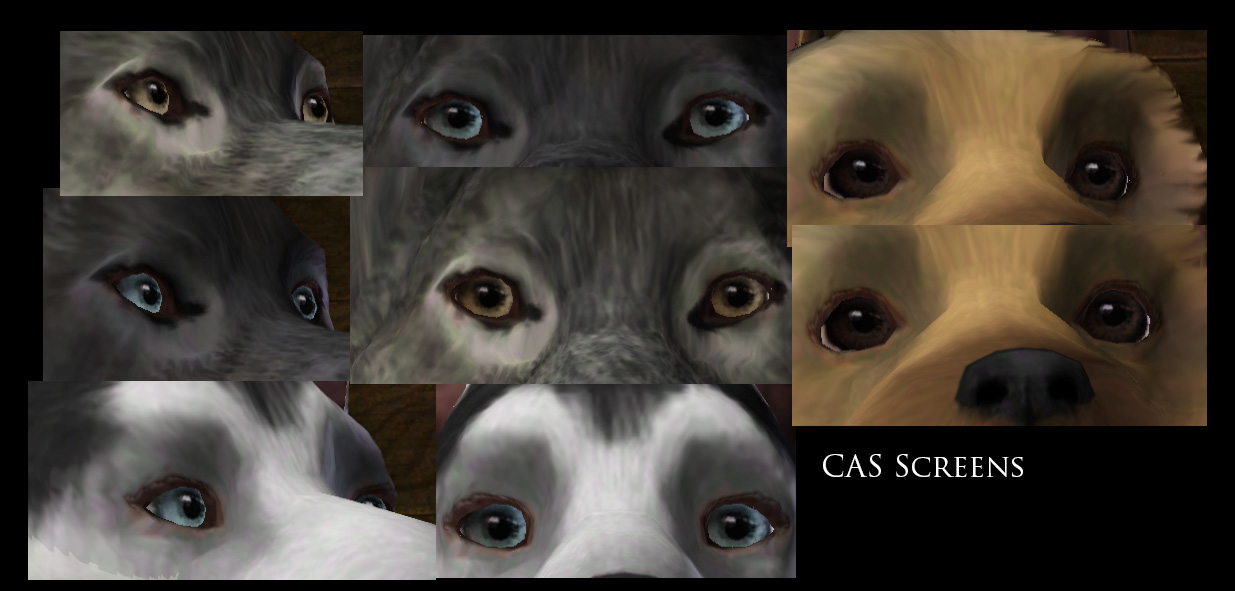 Sims  Mods And Cats And Dogs Issues