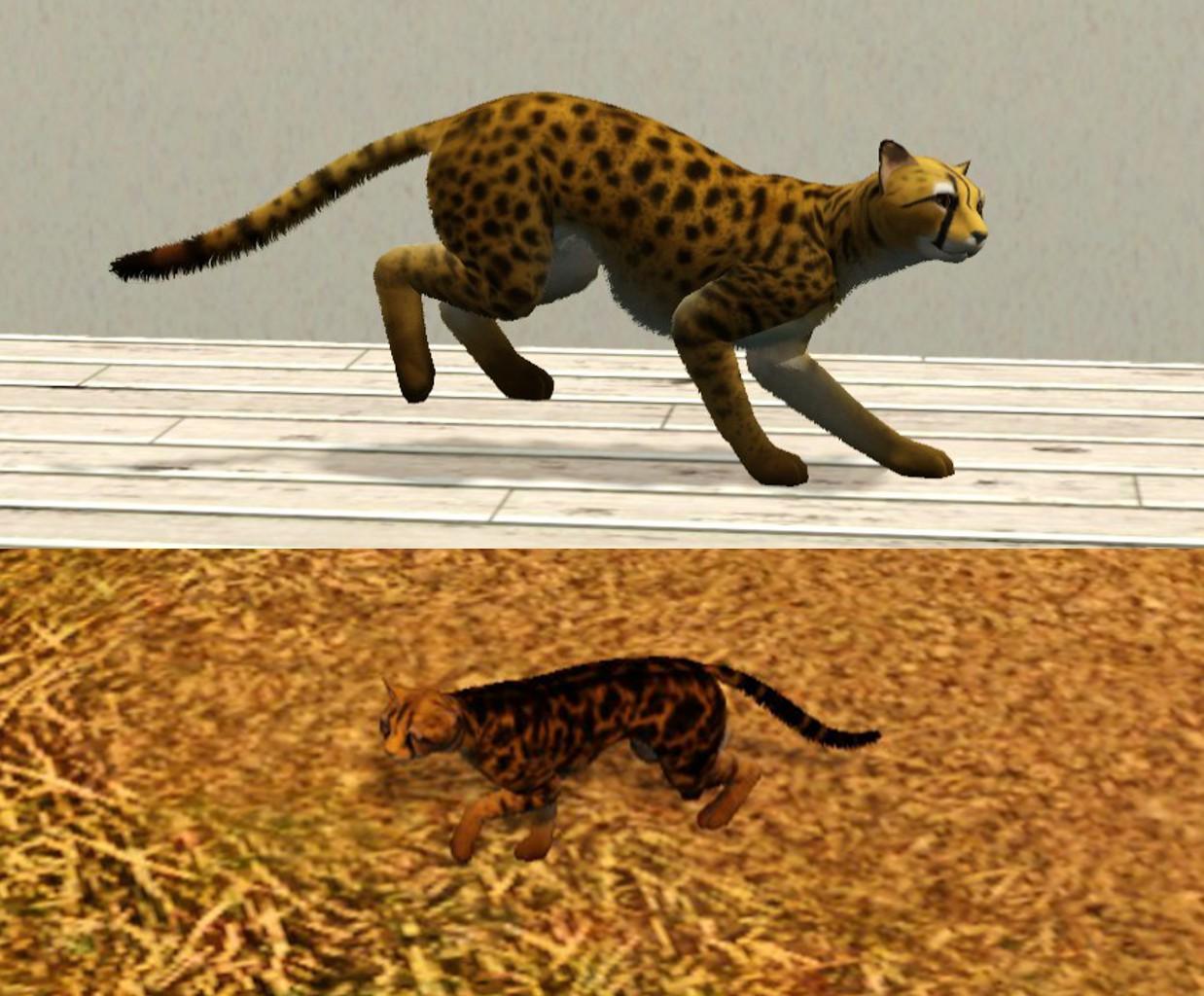 MTS_Lea.Sikora-1342038-Cheetahs.jpg