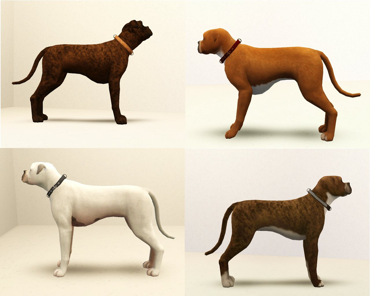How many different types of boxer dogs are there dogs for Types of dogs with photos