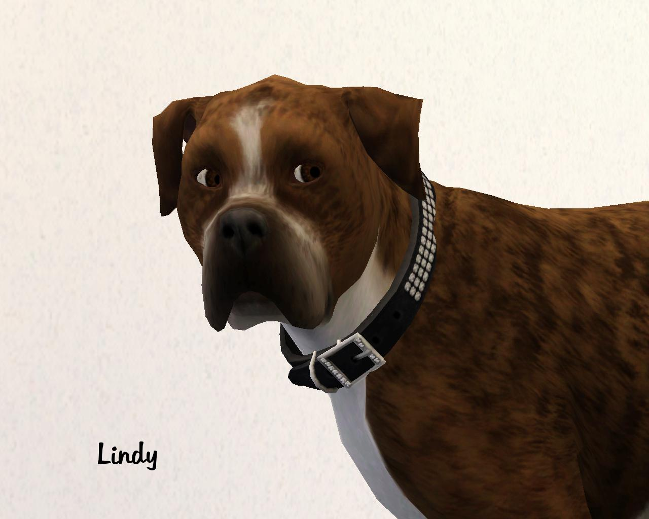 Mod The Sims Bountiful Boxers 4 very different dogs up for adoption