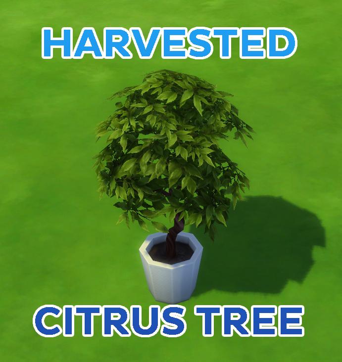 Собранное цитрусовое дерево