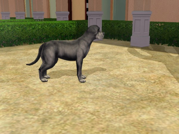 how to get dogs to breed on sims 2