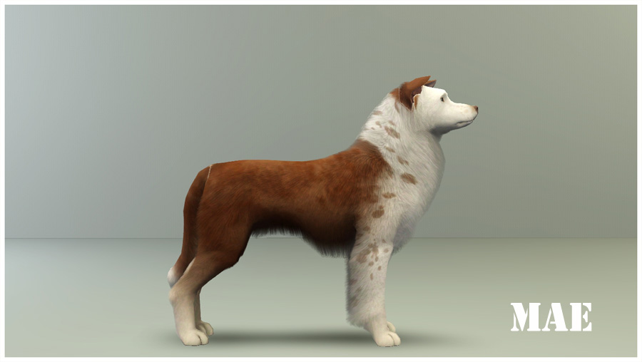 The sims 3 pets free full download [included crack-serial.