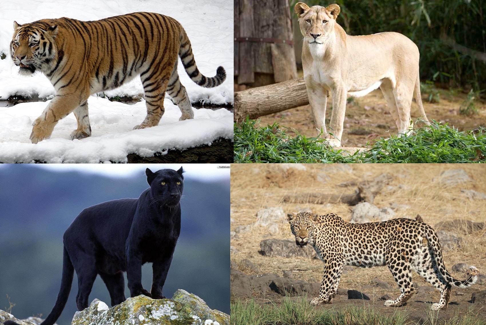 14 Rare Animal Breeds